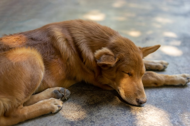 犬は地面で寝ています