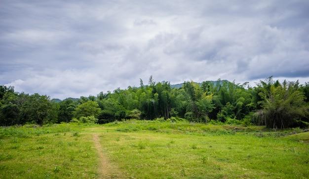 緑の芝生と森の木の歩道車線のパス