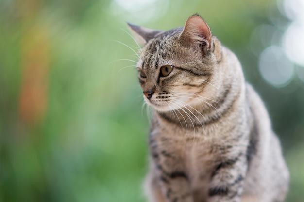 Сидения для кошек