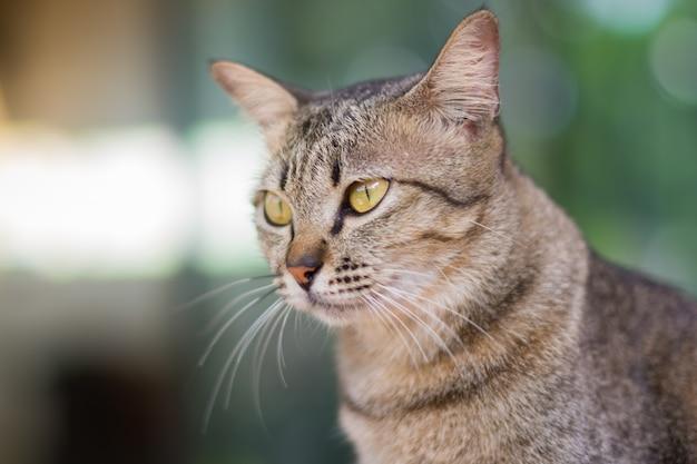 目の猫のクローズアップ