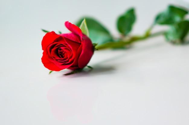 幸せなバレンタインデー。美しい赤いバラ