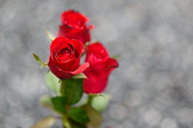 幸せなバレンタインデー。美しい赤いバラの花束