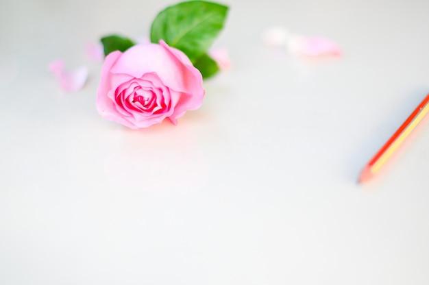 幸せなバレンタインデー、ピンクのバラ