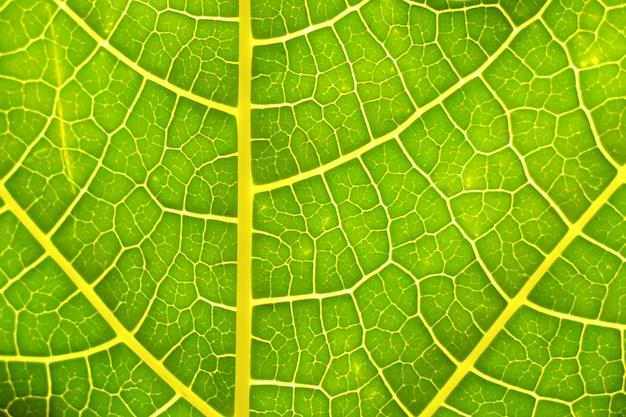詳細な静脈裏返しの葉