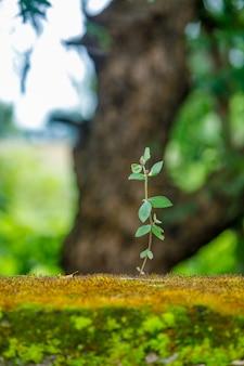Зеленое растение на стене дома