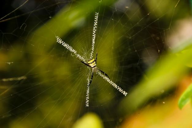 中央に焦点を当てた茶色のクモ