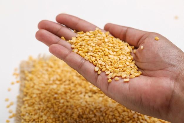 白い背景の上の手で黄色のムングムングダルレンズ豆豆