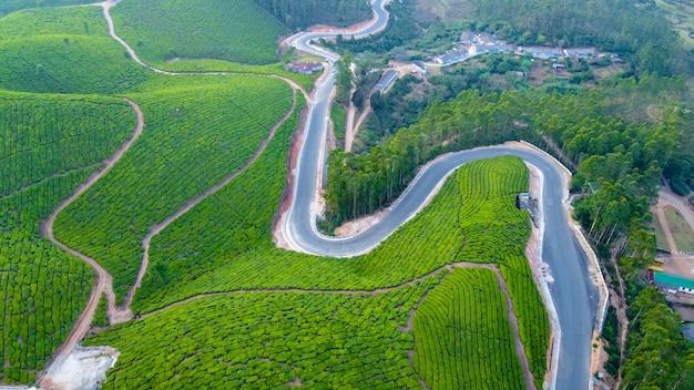 ムンナール、ケララ州、インドの茶畑。緑の丘の美しい景色。