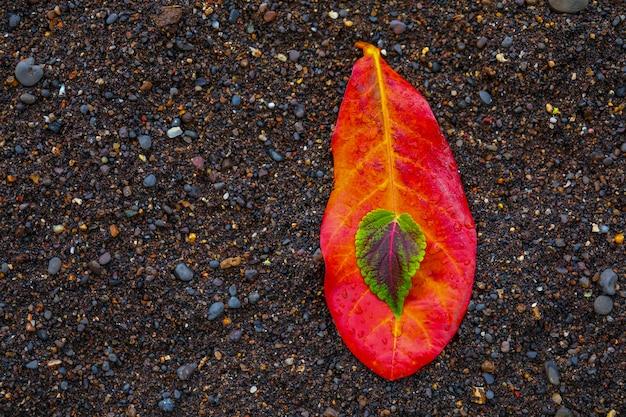Красочный фон из осенних листьев