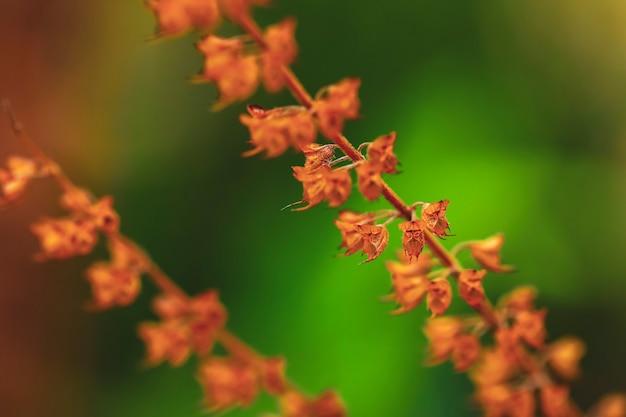プランテーションの新鮮なバジルと花
