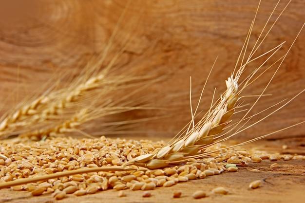 小麦の木のテクスチャ背景