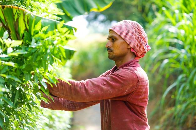 彼の分野で鎌とインドの農家