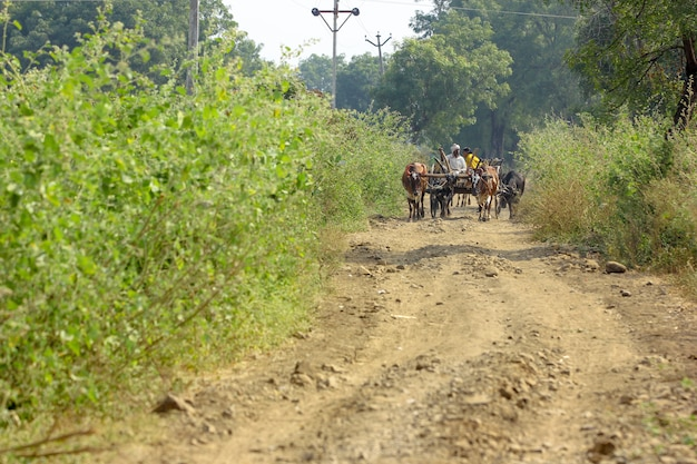 雄牛のカートにインドの農家