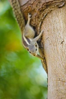 木の上のリス