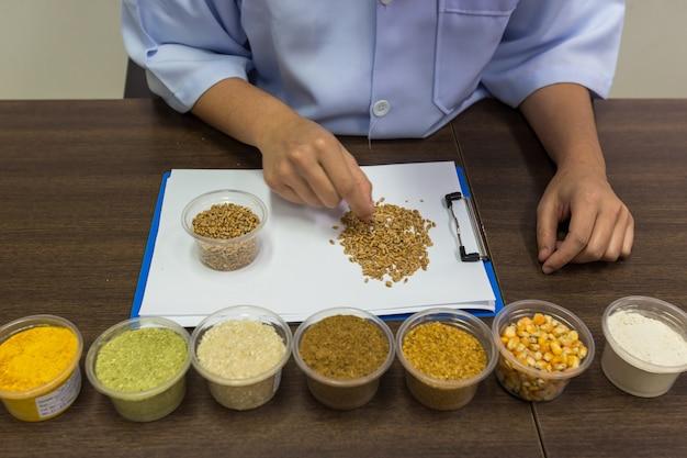 研究者は原料の品質を管理するためにトウモロコシを選別しています。