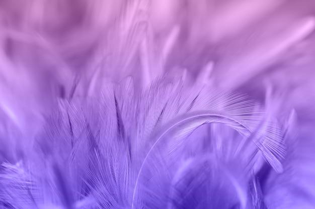 Фиолетовые куриные перья в мягком и размытом стиле для фона