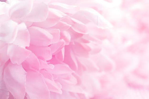 柔らかいパステルカラーの菊の花と背景のぼかしスタイル