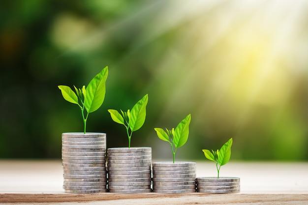 Дерево, растущее на монетах стека с солнечным лучом для экономии денег концепции