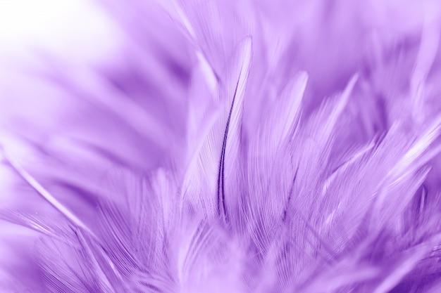 紫色の鶏の羽毛のソフトとぼかしスタイルの背景