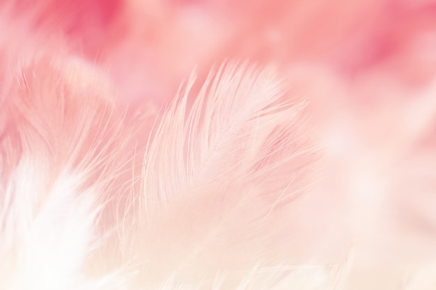 カラフルな背景、抽象的な羽毛テクスチャのぼかしのスタイルと柔らかい色