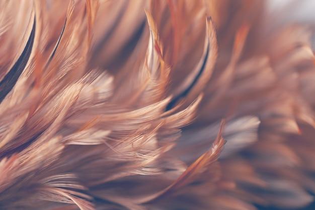 ぼかしのスタイルと背景の鶏の羽の質感の柔らかい色