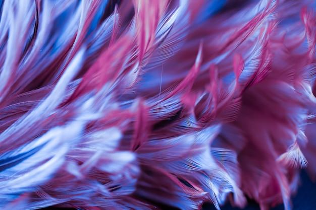 Размытие стили и мягкий цвет текстуры пера кур для фона