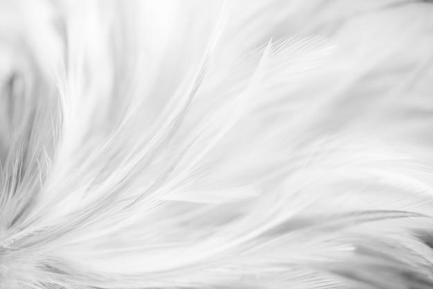 柔らかい灰色の鳥と鶏の羽と背景のぼかしスタイル。ダークトーン