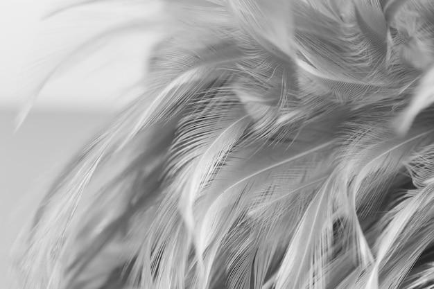 Лучистые куриные перья в мягком и размытом стиле для фона, черно-белые