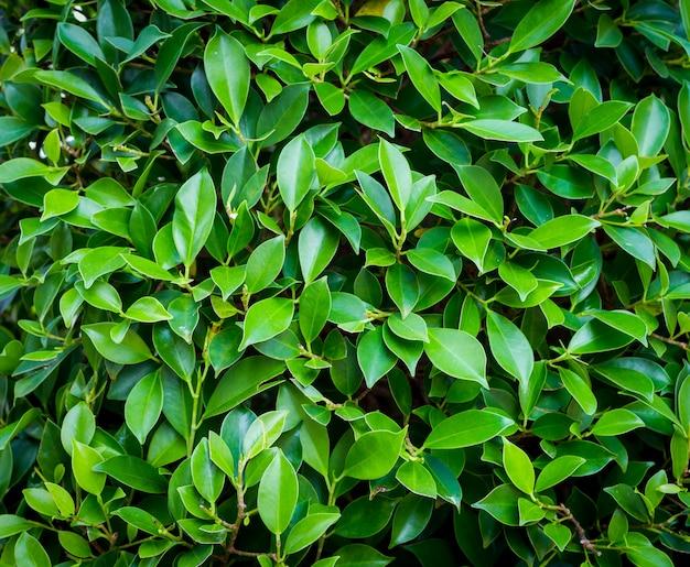 背景の緑の葉の自然