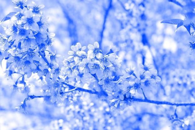 庭の背景の青い桜の花自然