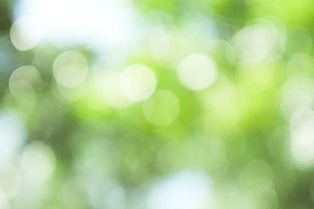 自然の木からフォーカスの背景から抽象的な緑ボケ