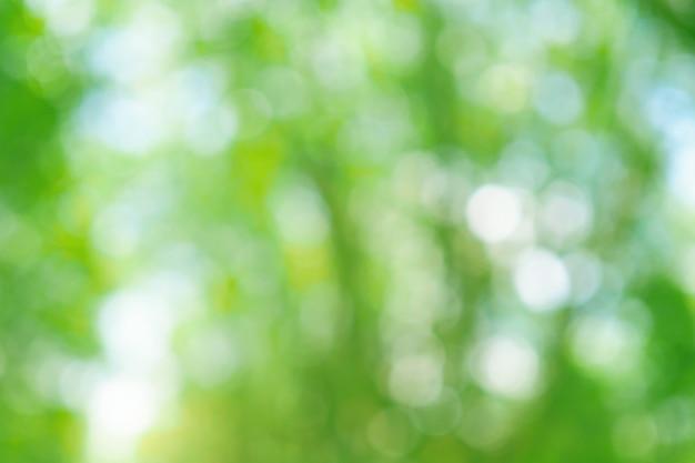 自然、柔らかい色の木からフォーカスの背景から緑のボケ