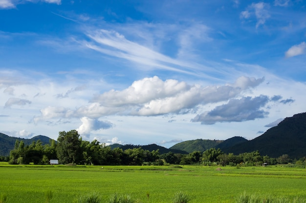 自然風景の雲と青い空とフェッシュグリーンライスのフィールド