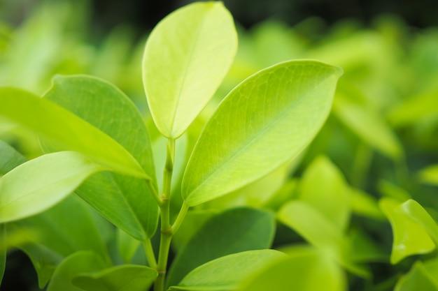 緑の背景に緑の葉の自然