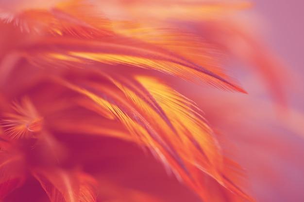 Разноцветные птичьи и куриные перья на мягком и размытом фоне
