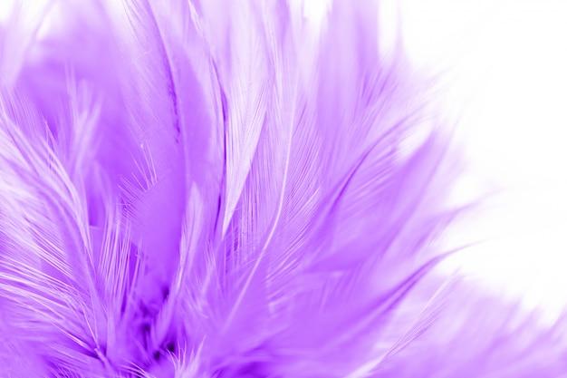 Красивая фиолетовая предпосылка конспекта текстуры пера цыпленка. мягкий и размытый цвет