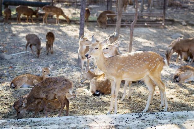 農場で茶色の鹿
