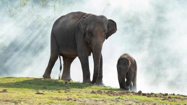緑の草の上を一緒に歩く息子と象。