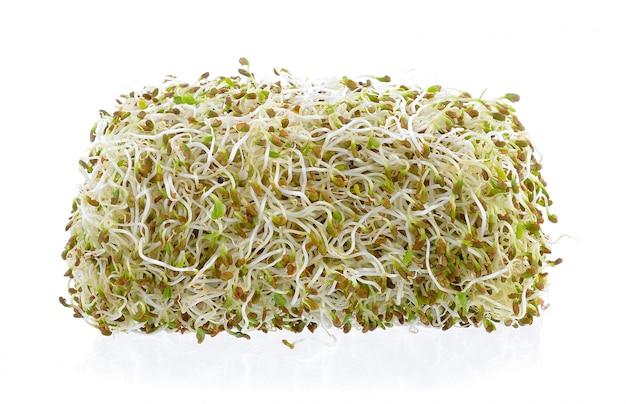 Проросшие семена люцерны на белой стене