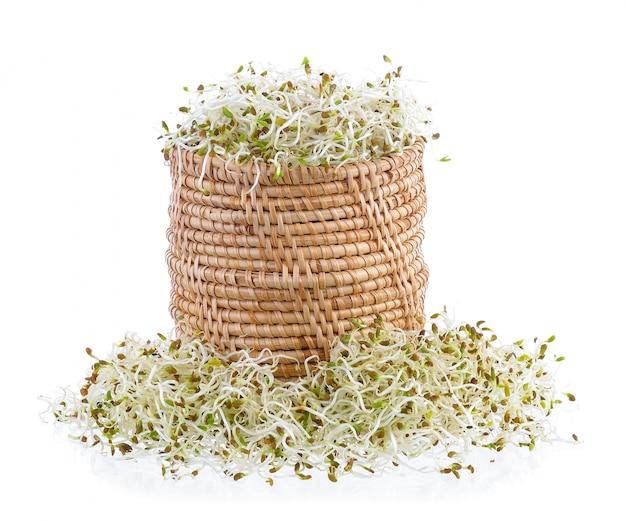 Проросшие семена люцерны в корзине на белой стене