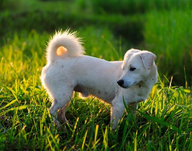 Щенок в зеленой луговой траве