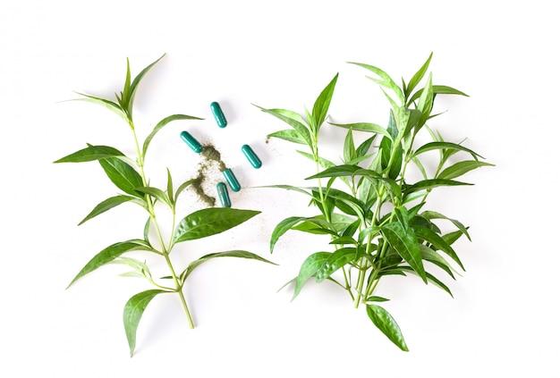 カリヤハーブ植物と白い表面上のカプセル。上面図