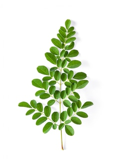 Листья моринги обладают целебными свойствами. вид сверху