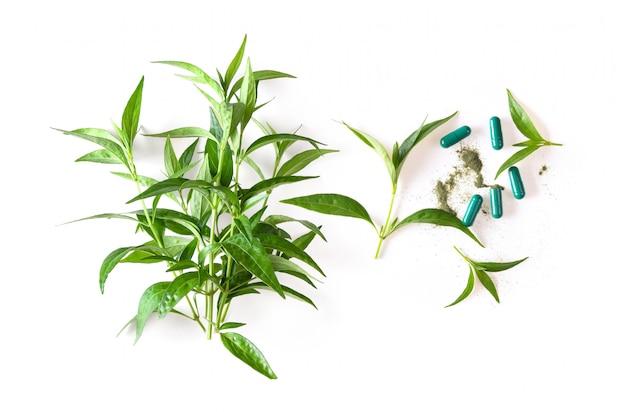 新鮮なカリーヤハーブ植物と白い表面上のカプセル。上面図