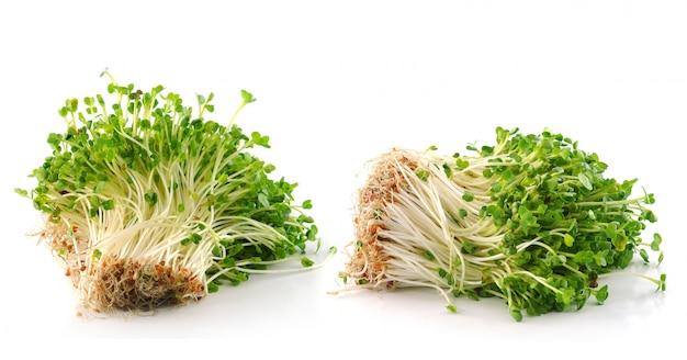 Изолированные ростки фасоли