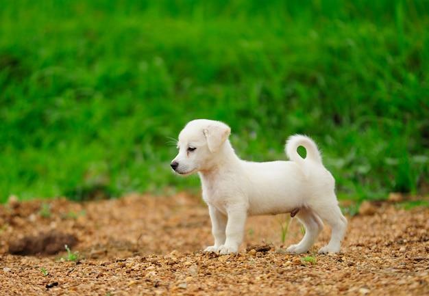 緑の草原の草の子犬
