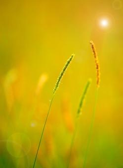 春のビュー植物を閉じる