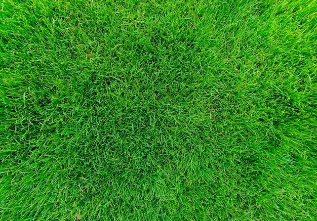 背景の緑の草のテクスチャ