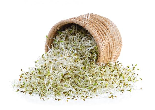 Проросшие семена люцерны в корзине на белом фоне