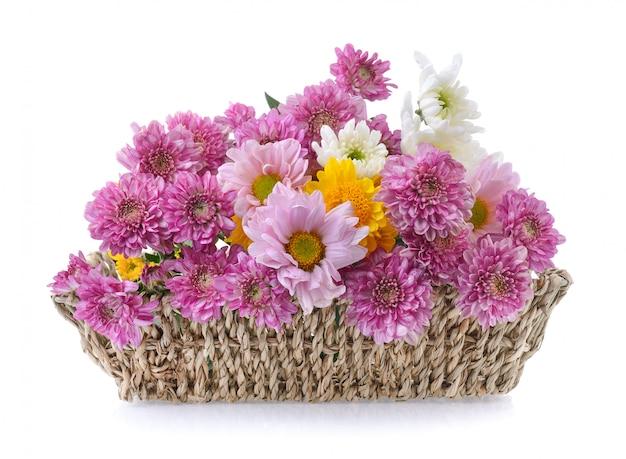 Хризантемы в корзине на белом фоне